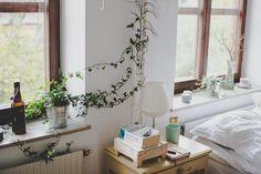 English ivy in interior