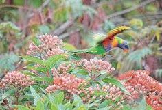 Image result for gawler street mt barker Magic, Bird, Street, Places, Photos, Animals, Lugares, Pictures, Animaux