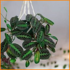 Keeping indoor plants alive can be intimidating.But hard-to-kill hanging plants can help make it less scary to keep beautiful indoor plants in your home. Hands down, any plant you add to just about any place adds natural life, color, and personality. Hanging Plants Outdoor, Indoor Plant Wall, Best Indoor Plants, Diy Hanging, Hanging Gardens, Kitchen Plants, Foliage Plants, Plant Design, Garden Design