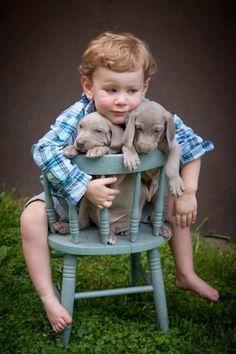 Friendship is so beautiful  #dog #pet http://www.nojigoji.com.au/