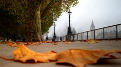 autumn in london Amongst the planet's most explored capitals London has something for everyone: from history and lifestyle to exquisite…