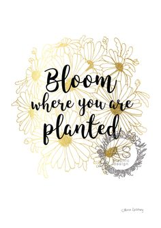 "Gold -""Bloom Where You Are Planted"" PRINTABLE ART, Coloured Daisy, Circle, Home art, Inspirational Quote, Coloured Print by AnnaSpilsburyDesign on Etsy https://www.etsy.com/au/listing/470886058/gold-bloom-where-you-are-planted"