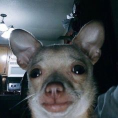 If you are ugly at least be funny Don't cry, sweetheart, I'll love you Funny Dog Memes, Funny Relatable Memes, Funny Dogs, Cute Dogs, Cute Animal Memes, Cute Funny Animals, Cute Baby Animals, Meme Faces, Funny Faces