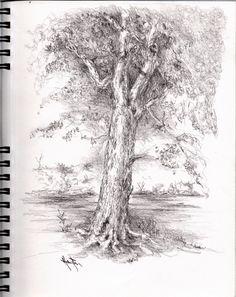 Pencil Sketches Trees Zajimava Kresba On Pinterest Pencil Drawings Sketchbooks And