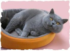 Read These Tips To Keep Your Cat Happy. *** Click image to read more details. #CatsFunny