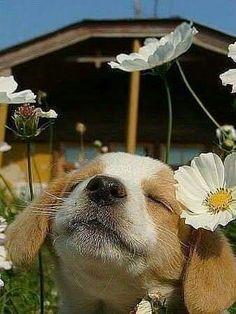 Beagle puppy enjoying the sunshine and flowers #PuppyHouses