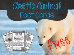Arctic animals are so much fun to learn about. The sensory exploration is a great hook and the FREE Arctic Animal Fact Cards with QR codes are great for integrating reading, science, and technology. Polar Bear Facts, Penguin Facts, Penguins And Polar Bears, Animal Facts For Kids, Animals For Kids, Kindergarten Social Studies, In Kindergarten, Animal Activities, Writing Activities