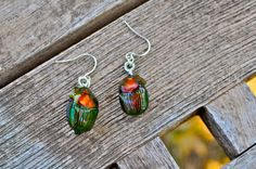 Floating Real Scarab Beetle Earrings Phanaeus igneus by InsectArt, $26.00