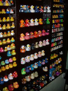 This is the type of display I need for my ducks!