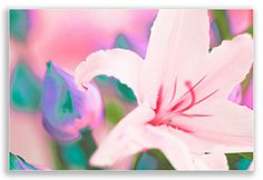 PINK LILY | Wall Art | Digitally painted Photograph on Canvas | Gallery Wrap | www.artintelligence.biz