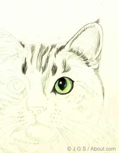 Color Pencil Drawing Tutorial How to Draw a Cat in Colored Pencil: Beginning With the Eyes - Cats are beautiful animals and they're fun to draw. Learn how to draw a beautiful realistic cat in colored pencil with this step by step lesson. Cat Drawing Tutorial, Pencil Drawing Tutorials, Art Tutorials, Love Drawings, Animal Drawings, Pencil Drawings, Art Drawings, Drawing Animals, Watercolor Techniques