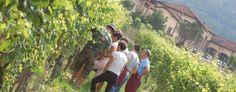 La Spinetta ~ Absolute Spitzenweine aus dem Piemont - http://weinblog.belvini.de/la-spinetta-piemont