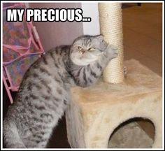 Bahahahaah!!! MY PRECIOUS!!!