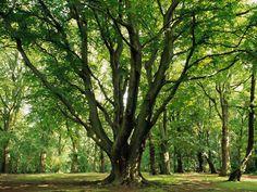 tree.jpg (1024×768)