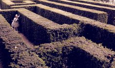 #maze #alice #wonderland