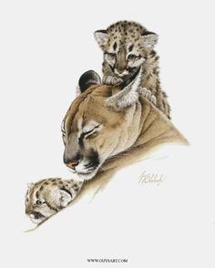 Cougar | Puma | Mountain Lion - painting by Guy Coheleach