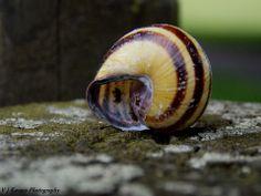 snail hous