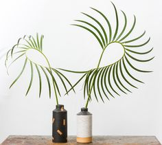 Ben Medansky has created a series of sculptural ceramic planters filled with unusual plant varieties: sculptural palm fronds, eucalyptus, cacti and more.