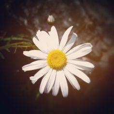 #primaverando