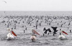 Aves vistas no lago Volvi, na cidade grega de Thessaloniki (Foto: REUTERS/Grigoris Siamidis)