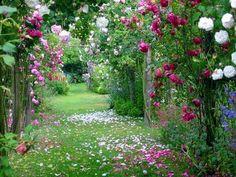 Climbing roses make a petal path