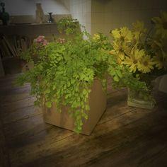 plants in a box:  recycled carton planter  portavaso di cartone riciclato