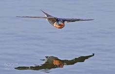 Low Flying by michaelcl1 via http://ift.tt/2tIxuah