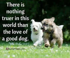 Nothing is truer in this world than the love a good dog. Puppy Quotes, Dog Quotes Funny, Pet Quotes, Cute Animal Videos, Cute Animal Pictures, Funny Babies, Funny Dogs, Friday Quotes Humor, Animal Love Quotes