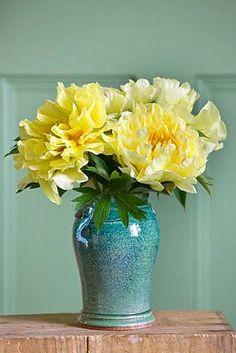 Strahlende Pfingstrosen in Gelb #tollwasblumenmachen #flower #peony #yellow