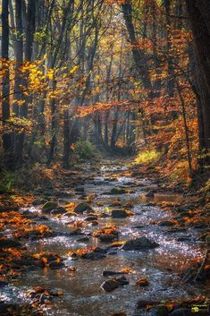 ***Ecker River in autumn (Harz Mountains, Germany) by Michael Lumme af. Fall Pictures, Nature Pictures, Pretty Pictures, All Nature, Amazing Nature, Beautiful World, Beautiful Places, Fuerza Natural, Autumn Scenes