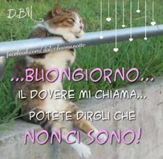 Buongiorno Good Morning Good Night, Day For Night, Wake Up, Funny Cats, Lol, Humor, Animals, Cristiani, Biscotti