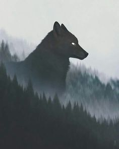 2018/05/18 Wolf