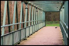 #How does a Moorhen cross    http://tracksandloops.weebly.com/