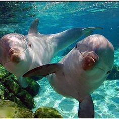 Dophin Cuties!, any ocean animal...