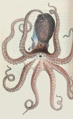 James Sowerby 1804