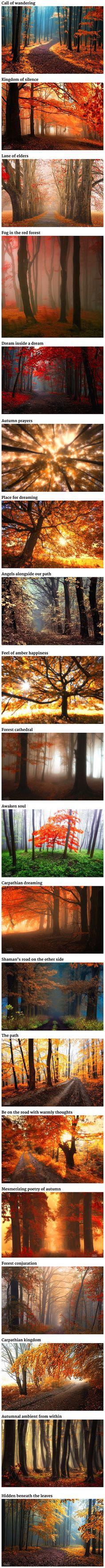Dream-Like Autumn Forests By Czech Photographer Janek Sedlář.