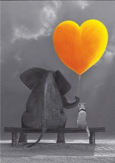 BLACK'n White picture of Elephant&dog Color Splash, Color Pop, Black White Photos, Black And White, White Picture, I Love Heart, Poster S, Mellow Yellow, Pet Birds