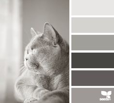 Design Seeds for all who color feline tones Scheme Color, Colour Pallette, Colour Schemes, Color Combos, Color Patterns, Colorful Decor, Colorful Interiors, Winter Typ, Creation Deco