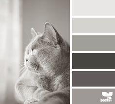 feline tones