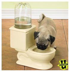 potty water bowl!!