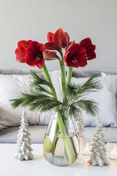 Get cozy Christmas mood with beautiful amaryllis Christmas Vases, Christmas Flowers, Christmas Mood, All Things Christmas, Christmas Decorations, Christmas Floral Arrangements, Flower Arrangements, Flower Pot Design, Christmas Interiors