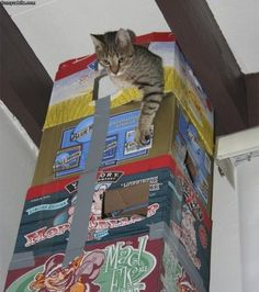 Cat Tower made of upcycled beer boxes and duct tape