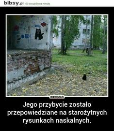Wtf Funny, Funny Jokes, Hilarious, Love Memes, Best Memes, Polish Memes, Everything And Nothing, Quality Memes, I Cant Even