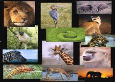 endangered-african-animals.jpg (567×408)