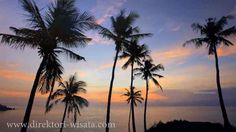 Lombok, Celestial, Sunset, Wallpaper, Plants, Outdoor, Wallpaper Desktop, Outdoors, Wallpapers