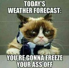Funny memes sarcastic truths hilarious grumpy cat ideas for 2019 Grumpy Cat Quotes, Funny Grumpy Cat Memes, Funny Animal Memes, Cute Funny Animals, Funny Animal Pictures, Funny Cats, Funny Memes, Grumpy Kitty, Funniest Animals