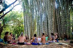 Breathwork session by the #bamboo at Finca Amrta during In Tune Expansion in Costa Rica! Like a dream!  #costarica #sustainability #breathwork #circle #community #photography #yoga #together #festival #gathering #convergence #travel #transformationaltravel #jungle #grow #change #farm #ecovillage #love #breathe #acroyoga by nu_mundo