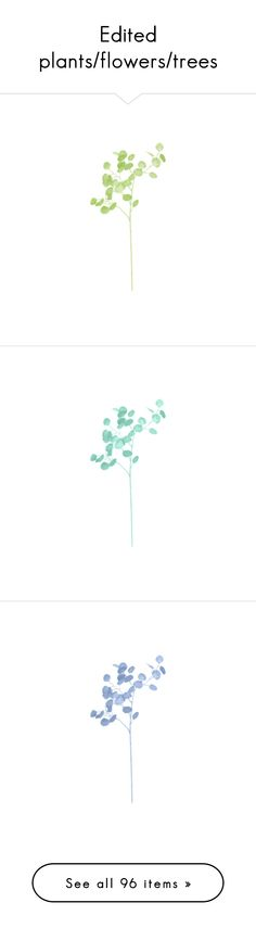 Edited plants/flowers/trees by chloe89 on Polyvore featuring flowers, fillers, plants, backgrounds, green, blue, fiori, nature, pink and extras