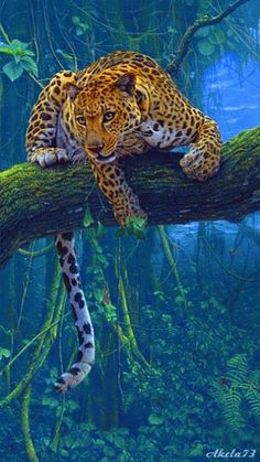 FULL animal diy diamond painting cross stitch leopards diamond embroidery kits mosaic pattern picture resin drill home decor. Nature Animals, Animals And Pets, Cute Animals, Wild Animals, Rainforest Animals, Beautiful Cats, Animals Beautiful, Beautiful Pictures, Colorful Pictures