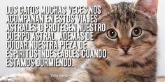 """""""La función de los gatos como seres espirituales"""""""